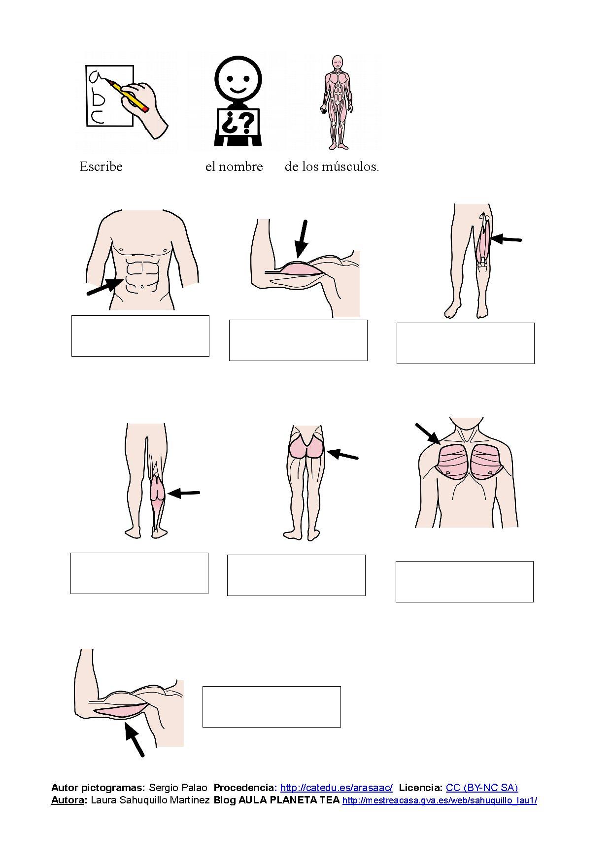 Lujoso Libro Para Colorear De Músculos Adorno - Dibujos Para ...